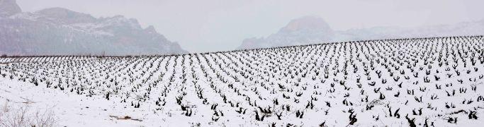 Viñedos en invierno con nieve, DOC La Rioja, Rioja Alta,  Haro, La Rioja