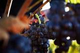 16/10/18 Bodegas Exopto, Abalos (La Rioja) y Laguardia (Alava). Photo by James Sturcke | sturcke.org